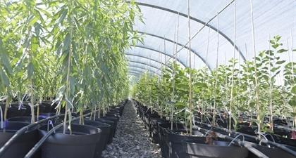 Растения отглеждани в контейнери